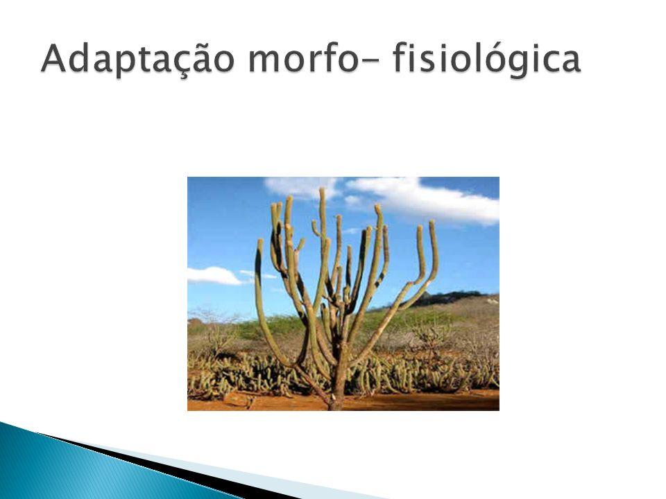 Adaptação morfo- fisiológica