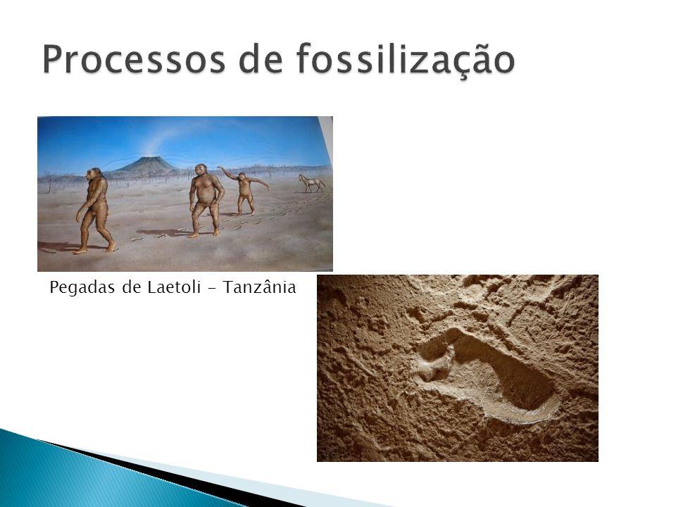 Processos de fossilização