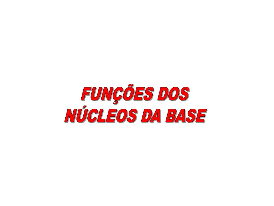 FUNÇÕES DOS NÚCLEOS DA BASE