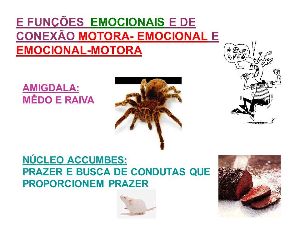 E FUNÇÕES EMOCIONAIS E DE CONEXÃO MOTORA- EMOCIONAL E EMOCIONAL-MOTORA