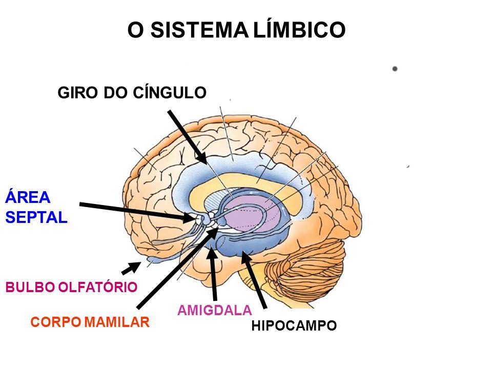 O SISTEMA LÍMBICO GIRO DO CÍNGULO ÁREA SEPTAL BULBO OLFATÓRIO AMIGDALA