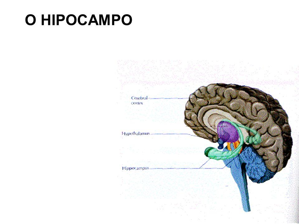 O HIPOCAMPO