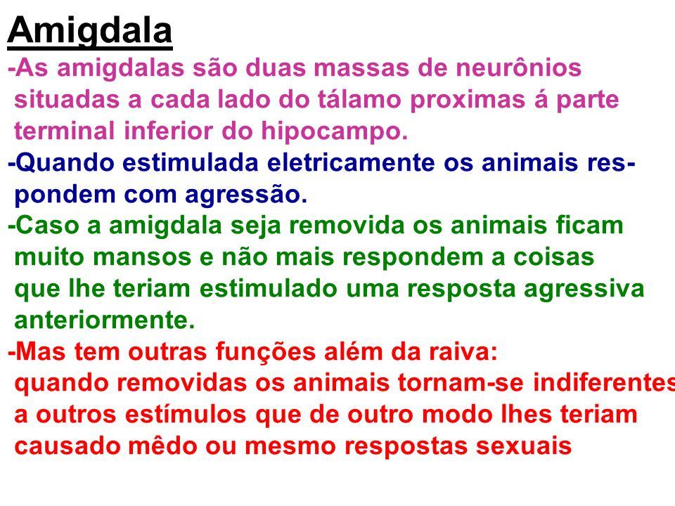Amigdala -As amigdalas são duas massas de neurônios