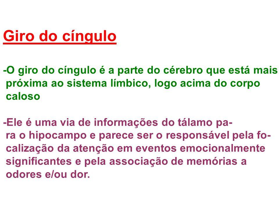 Giro do cíngulo -O giro do cíngulo é a parte do cérebro que está mais
