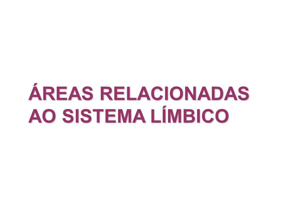 ÁREAS RELACIONADAS AO SISTEMA LÍMBICO