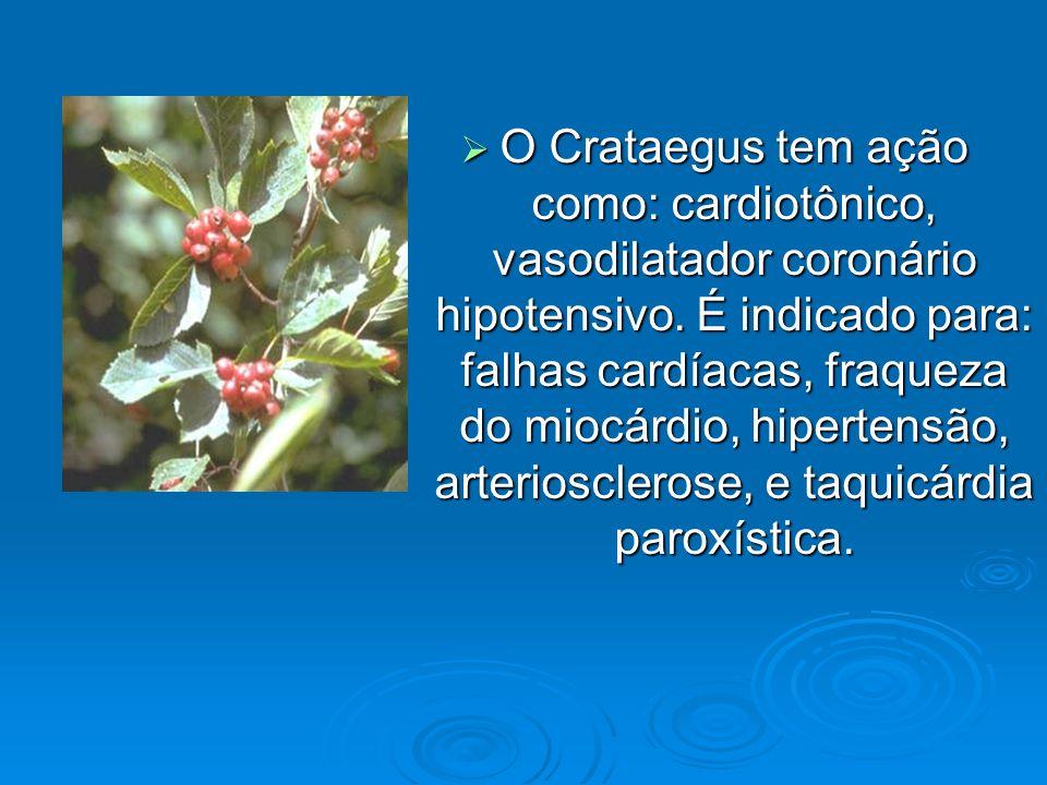O Crataegus tem ação como: cardiotônico, vasodilatador coronário hipotensivo.