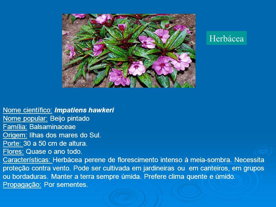 Herbácea