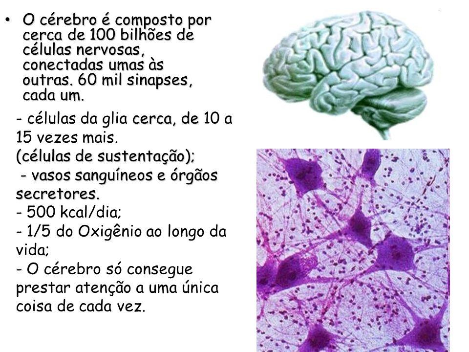 O cérebro é composto por cerca de 100 bilhões de células nervosas, conectadas umas às outras. 60 mil sinapses, cada um.