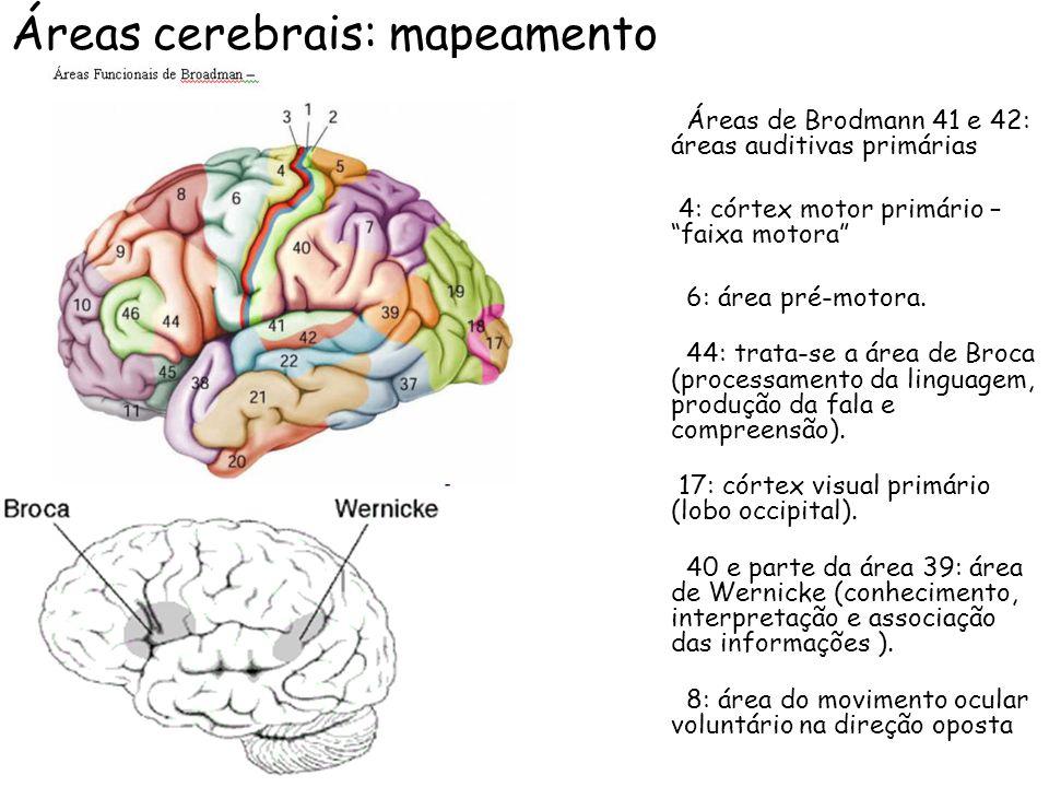 Áreas cerebrais: mapeamento