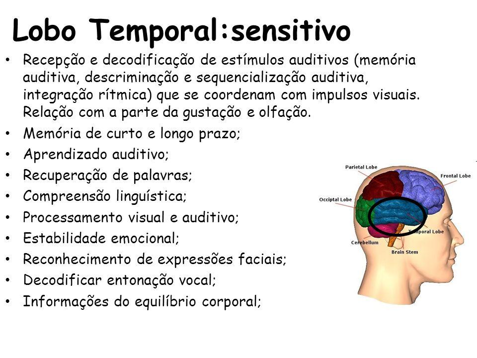 Lobo Temporal:sensitivo