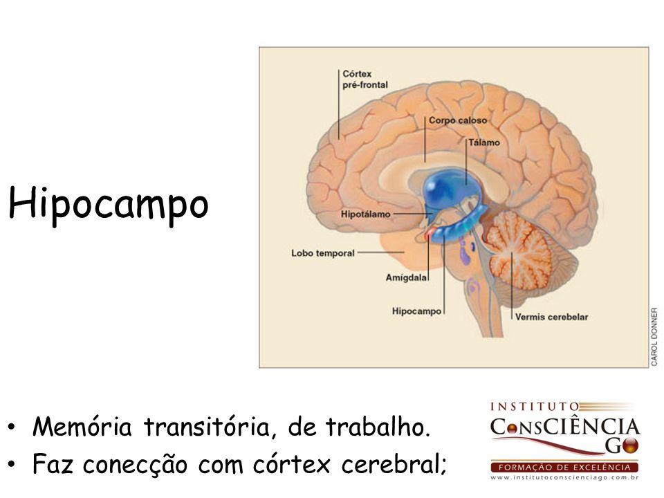 Hipocampo Memória transitória, de trabalho.