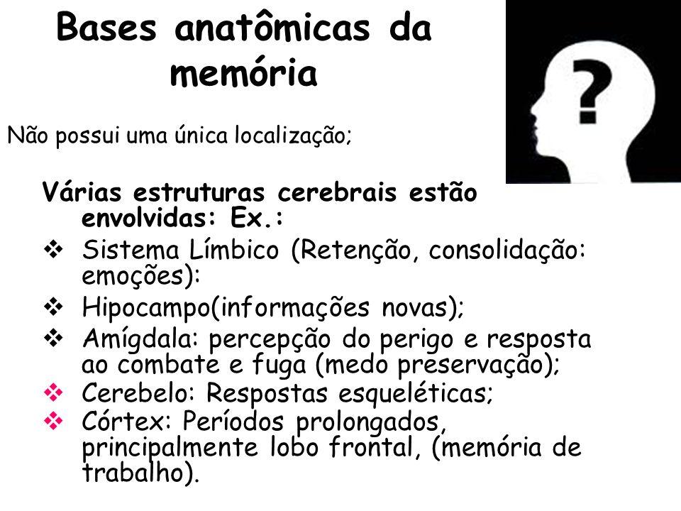 Bases anatômicas da memória