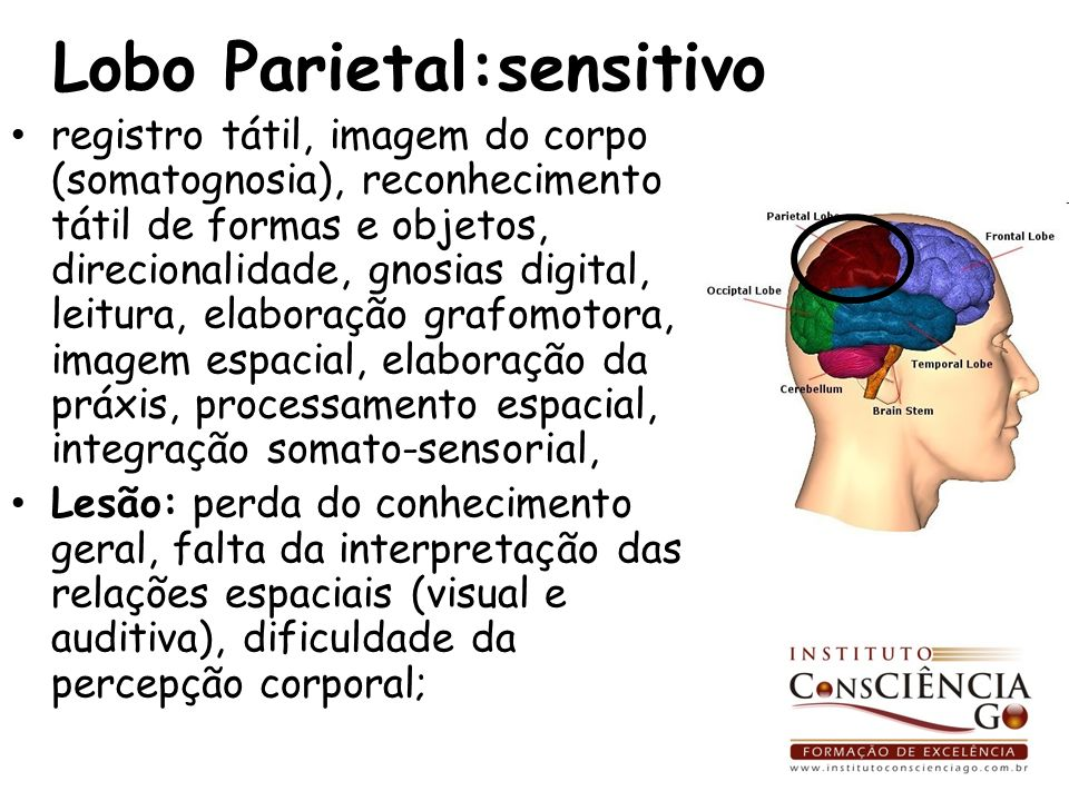 Lobo Parietal:sensitivo