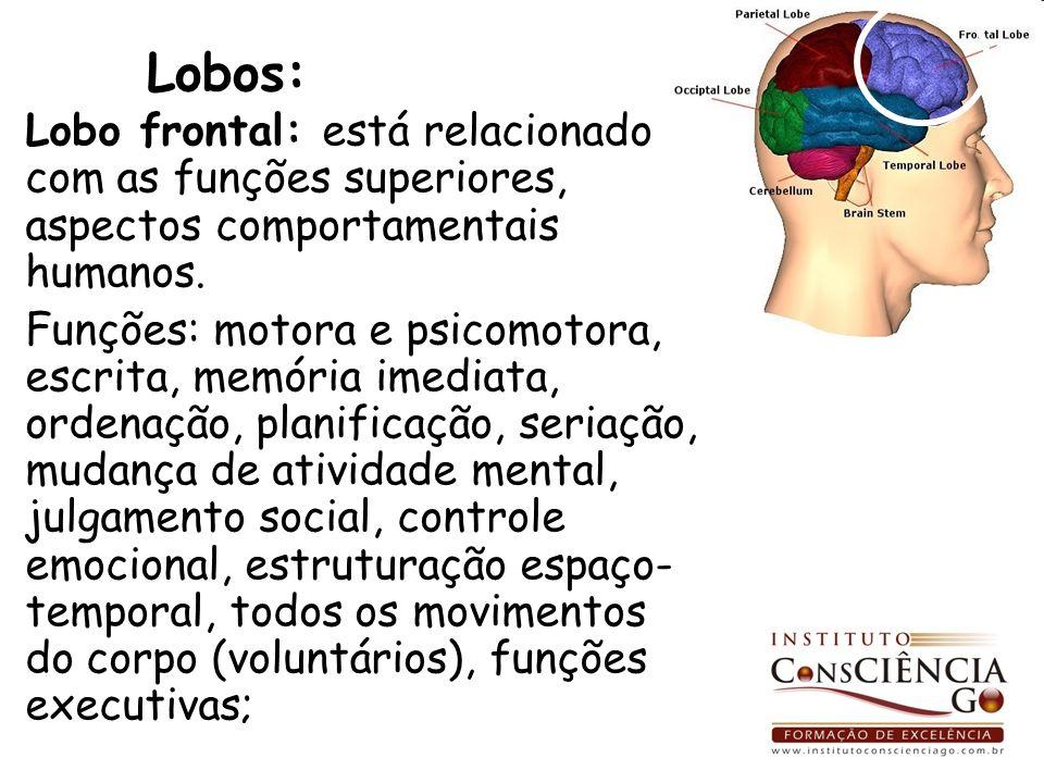 Lobos: Lobo frontal: está relacionado com as funções superiores, aspectos comportamentais humanos.