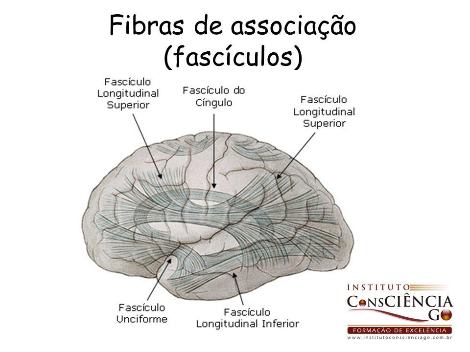 Fibras de associação (fascículos)