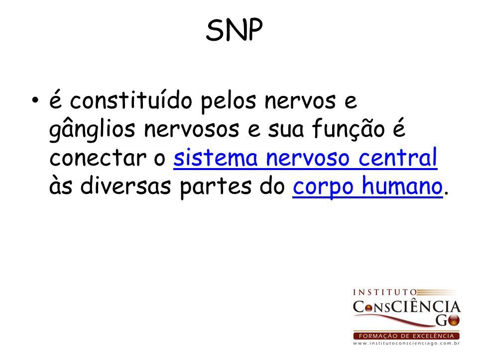 SNP é constituído pelos nervos e gânglios nervosos e sua função é conectar o sistema nervoso central às diversas partes do corpo humano.