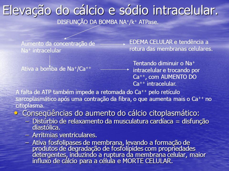Elevação do cálcio e sódio intracelular.