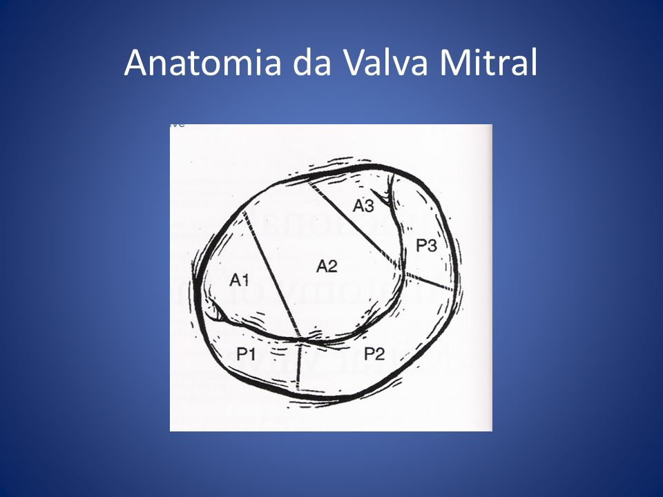 Anatomia da Valva Mitral