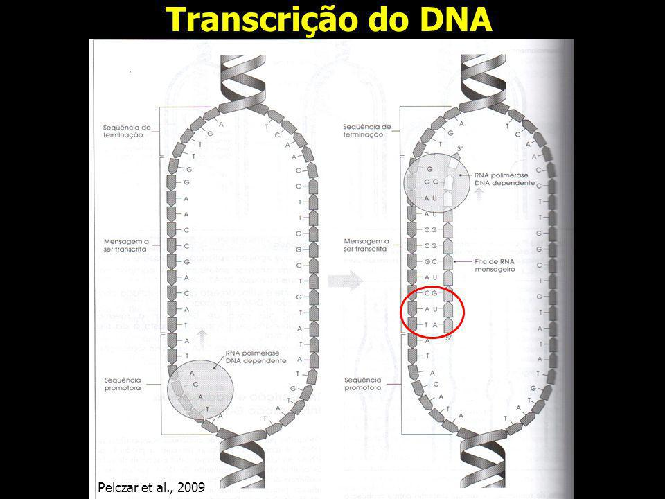 Transcrição do DNA Pelczar et al., 2009