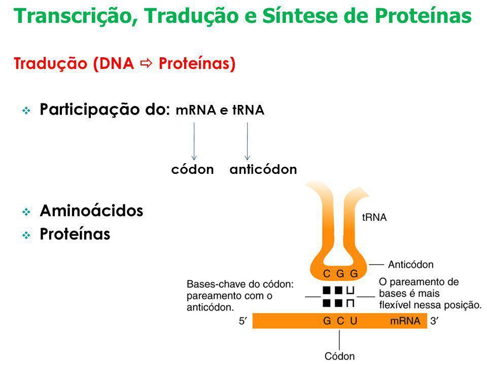 Transcrição, Tradução e Síntese de Proteínas