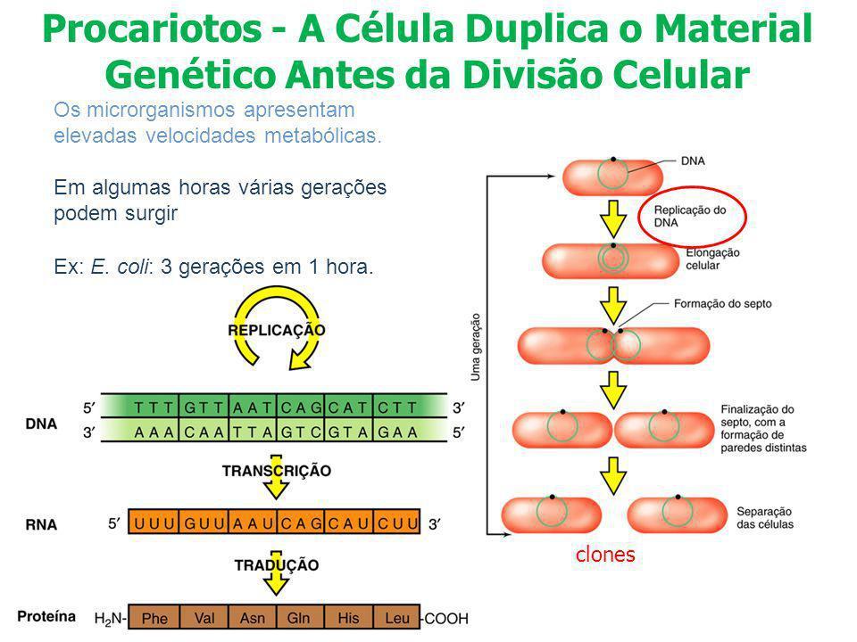 Procariotos - A Célula Duplica o Material Genético Antes da Divisão Celular