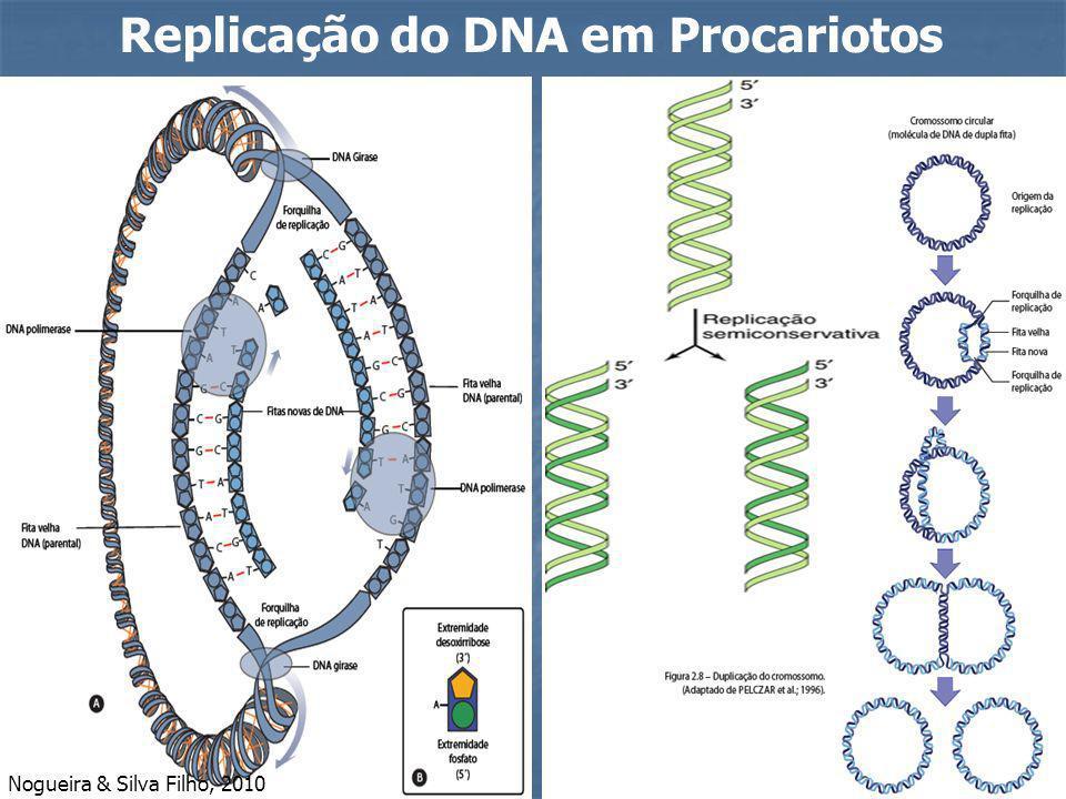Replicação do DNA em Procariotos