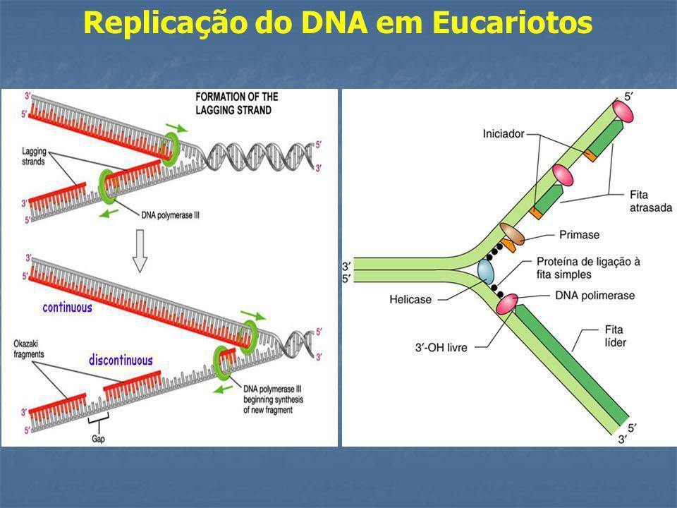 Replicação do DNA em Eucariotos