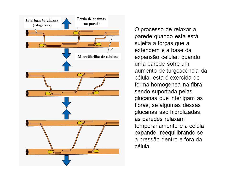 Microfibrilha de celulose