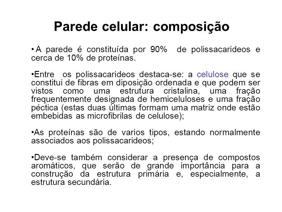 Parede celular: composição