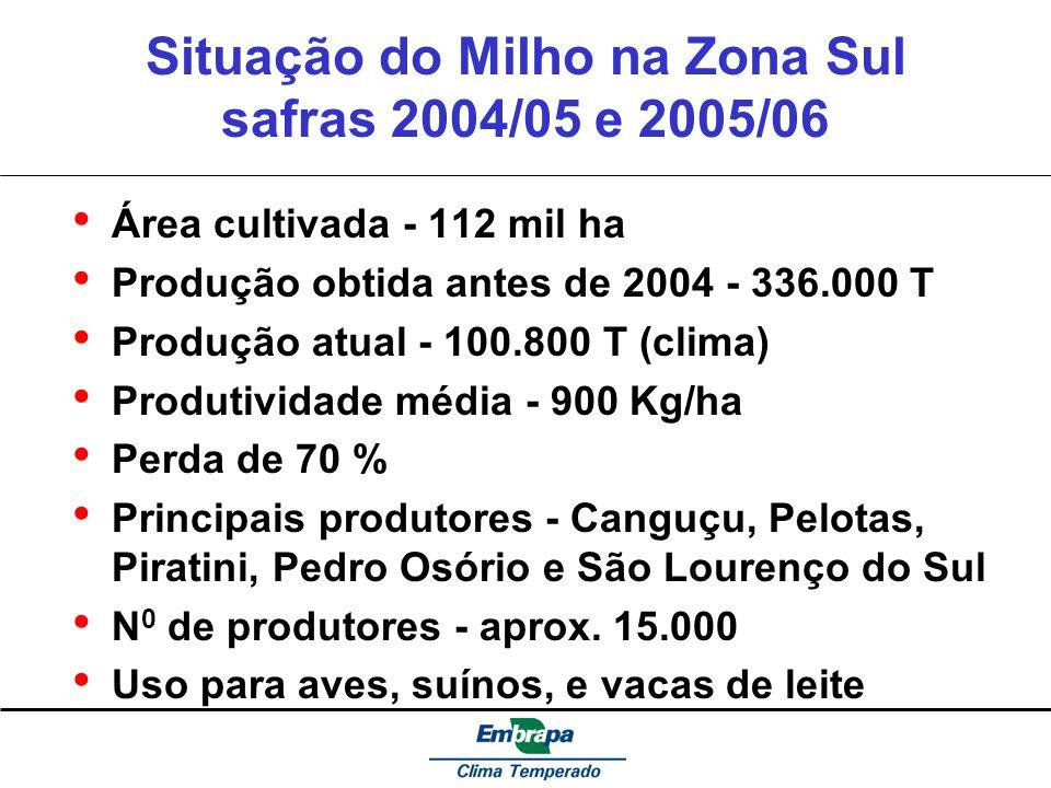 Situação do Milho na Zona Sul safras 2004/05 e 2005/06