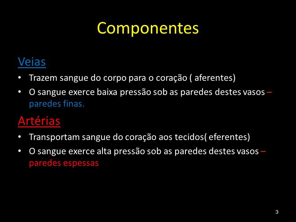 Componentes Veias Artérias