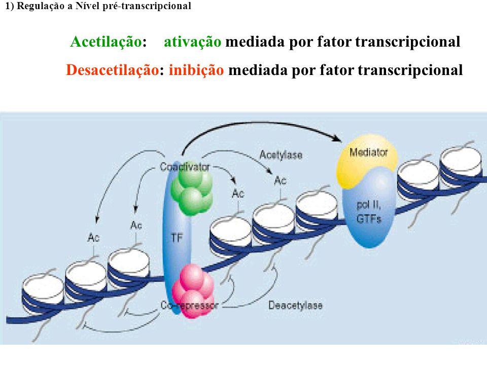 Acetilação: ativação mediada por fator transcripcional