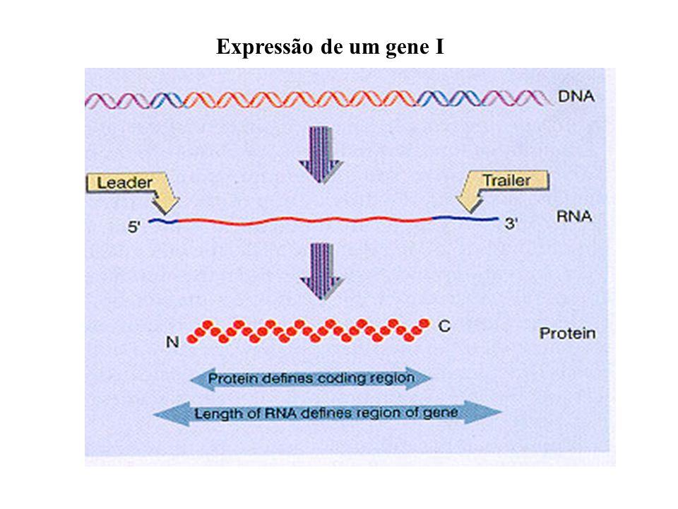 Expressão de um gene I
