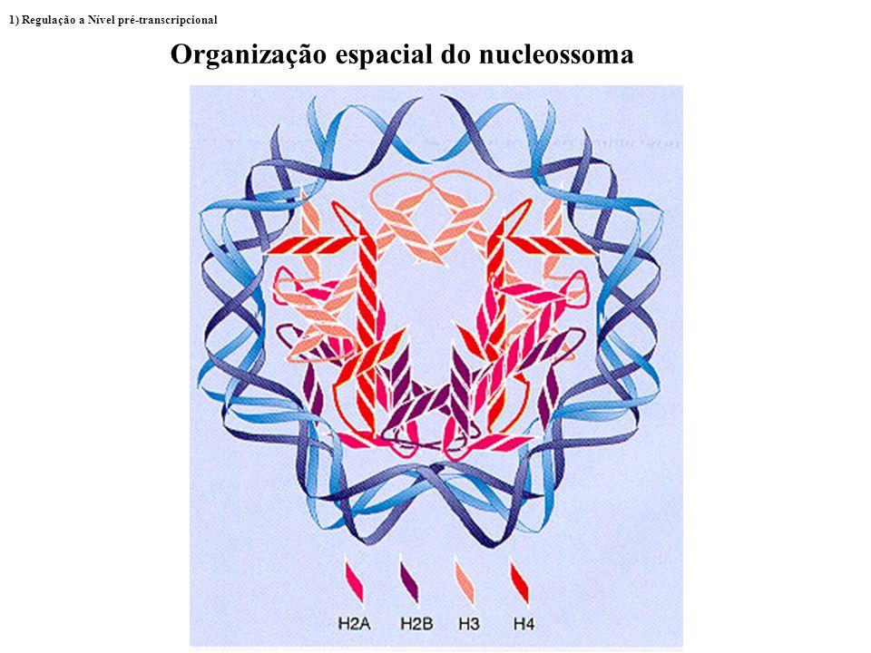Organização espacial do nucleossoma