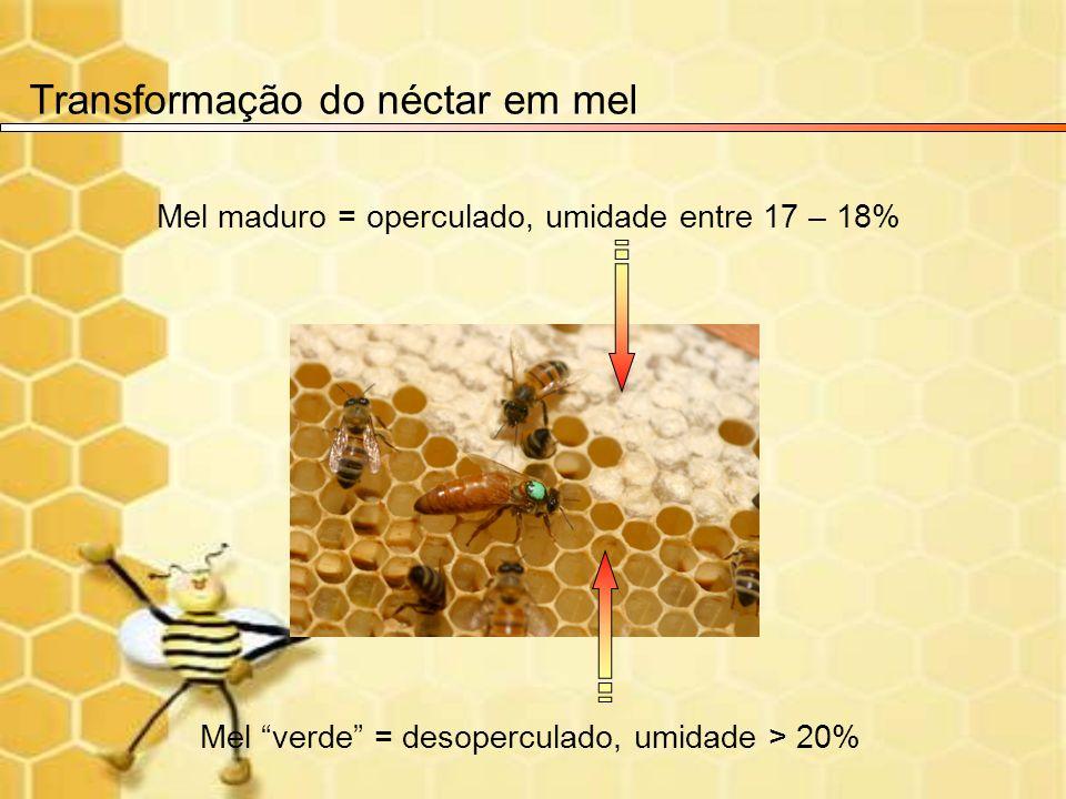 Transformação do néctar em mel