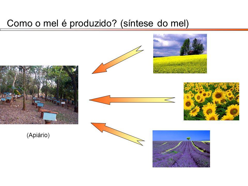 Como o mel é produzido (síntese do mel)