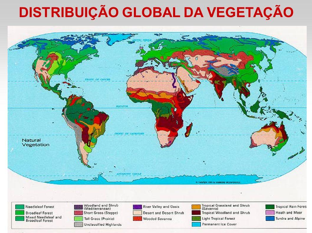DISTRIBUIÇÃO GLOBAL DA VEGETAÇÃO