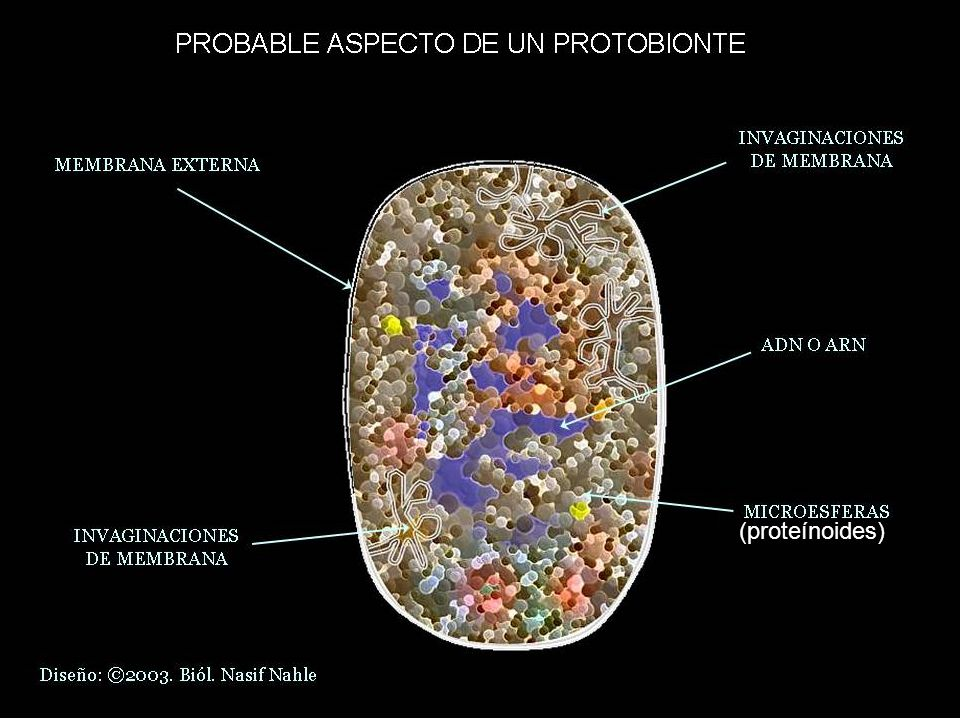 (proteínoides)