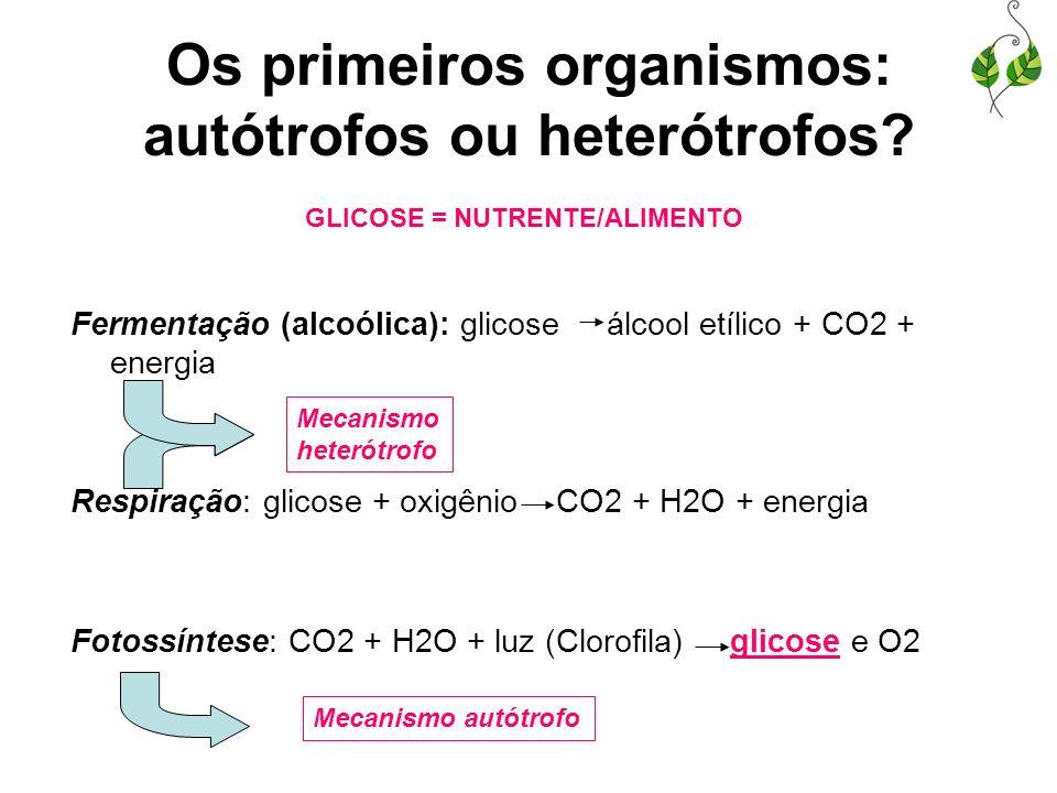 Os primeiros organismos: autótrofos ou heterótrofos