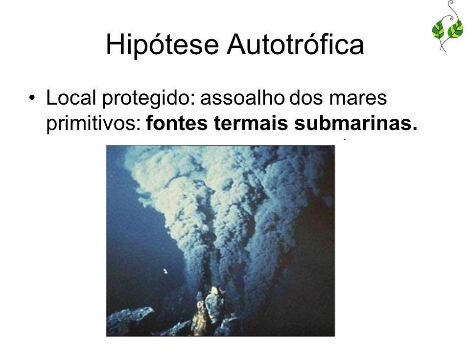 Hipótese Autotrófica Local protegido: assoalho dos mares primitivos: fontes termais submarinas.