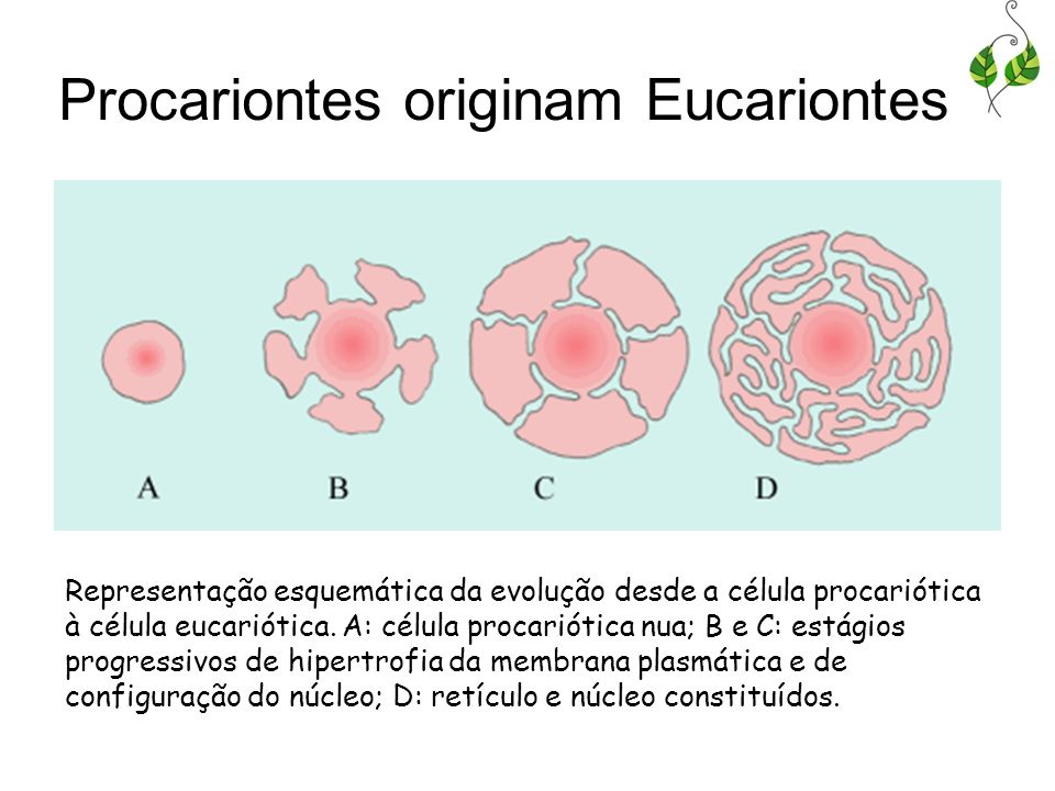 Procariontes originam Eucariontes