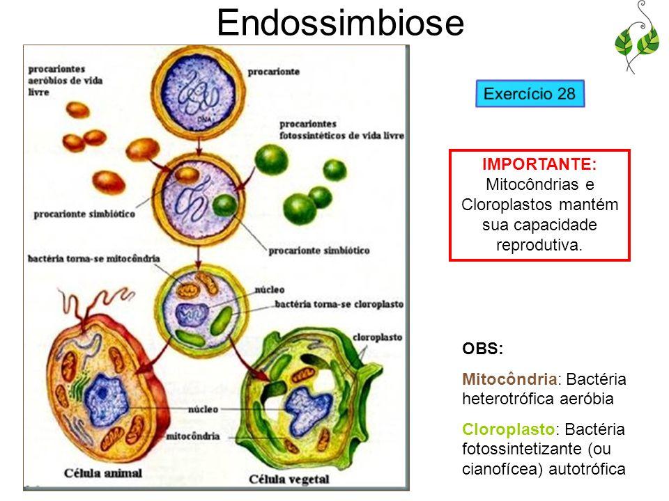 Endossimbiose Exercício 28