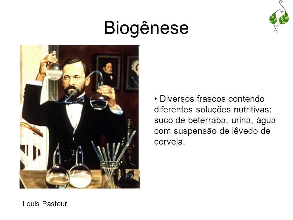 Biogênese Diversos frascos contendo diferentes soluções nutritivas: suco de beterraba, urina, água com suspensão de lêvedo de cerveja.