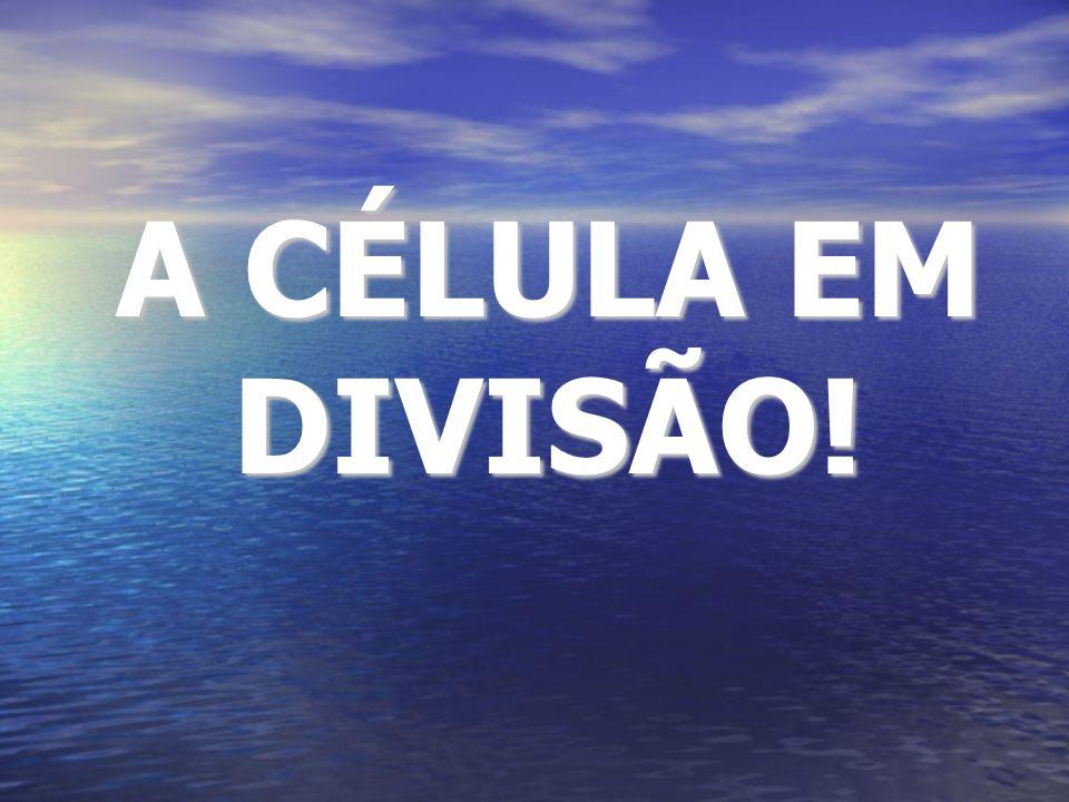 A CÉLULA EM DIVISÃO!