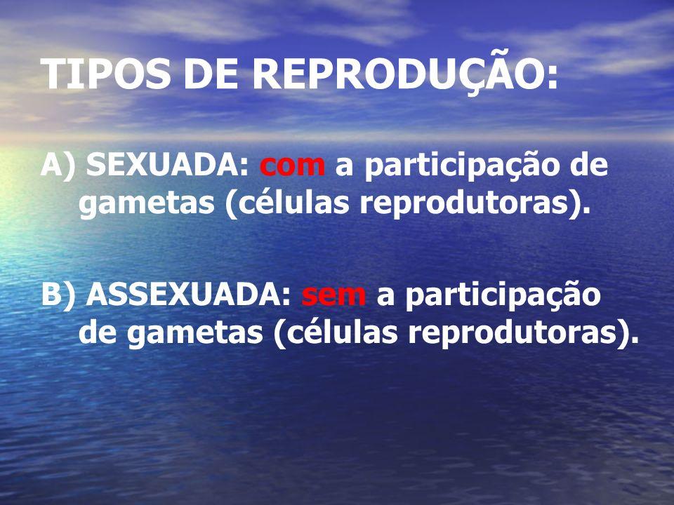 TIPOS DE REPRODUÇÃO: