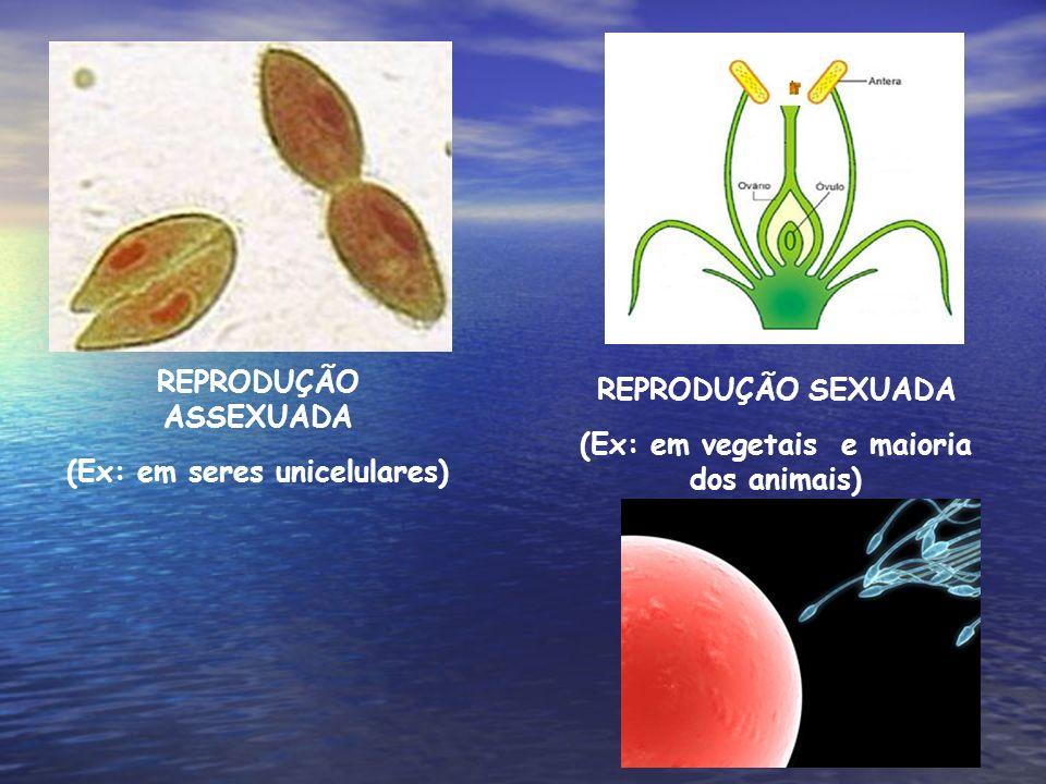 (Ex: em seres unicelulares) (Ex: em vegetais e maioria dos animais)