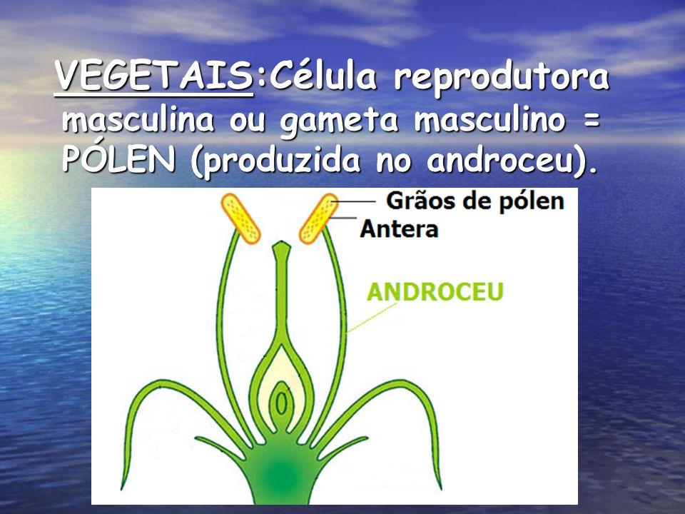 VEGETAIS:Célula reprodutora masculina ou gameta masculino = PÓLEN (produzida no androceu).
