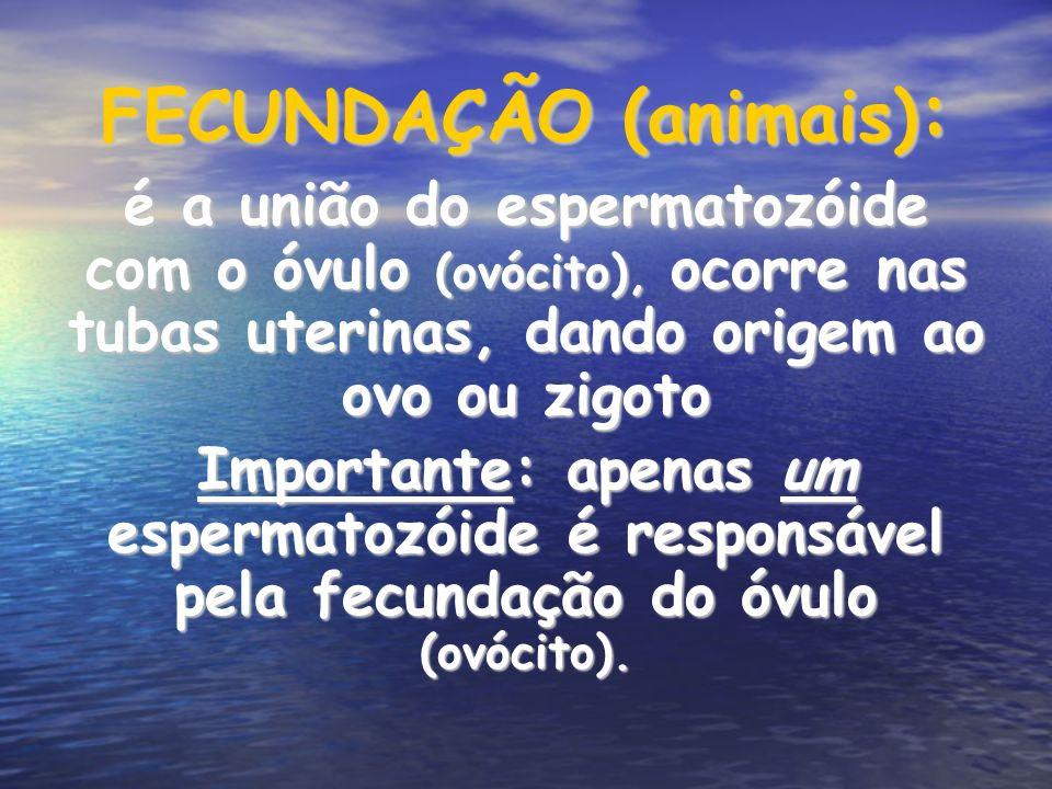 FECUNDAÇÃO (animais):
