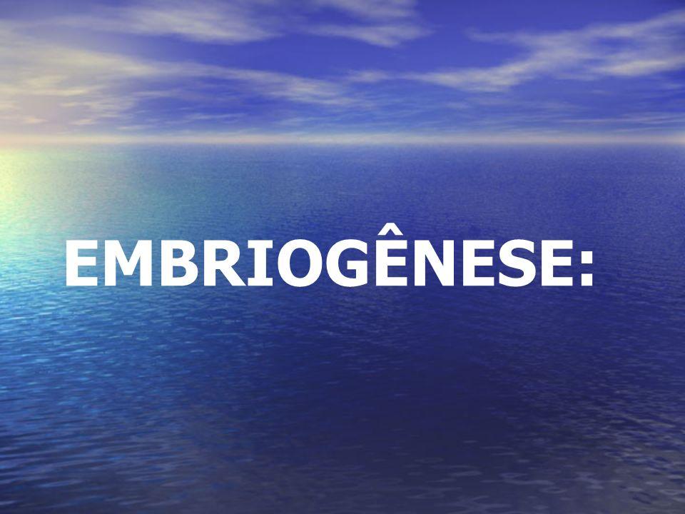 EMBRIOGÊNESE: