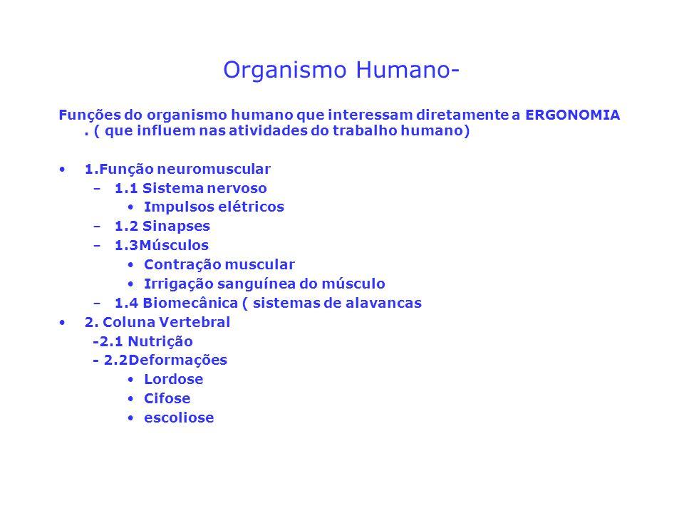 Organismo Humano-Funções do organismo humano que interessam diretamente a ERGONOMIA . ( que influem nas atividades do trabalho humano)